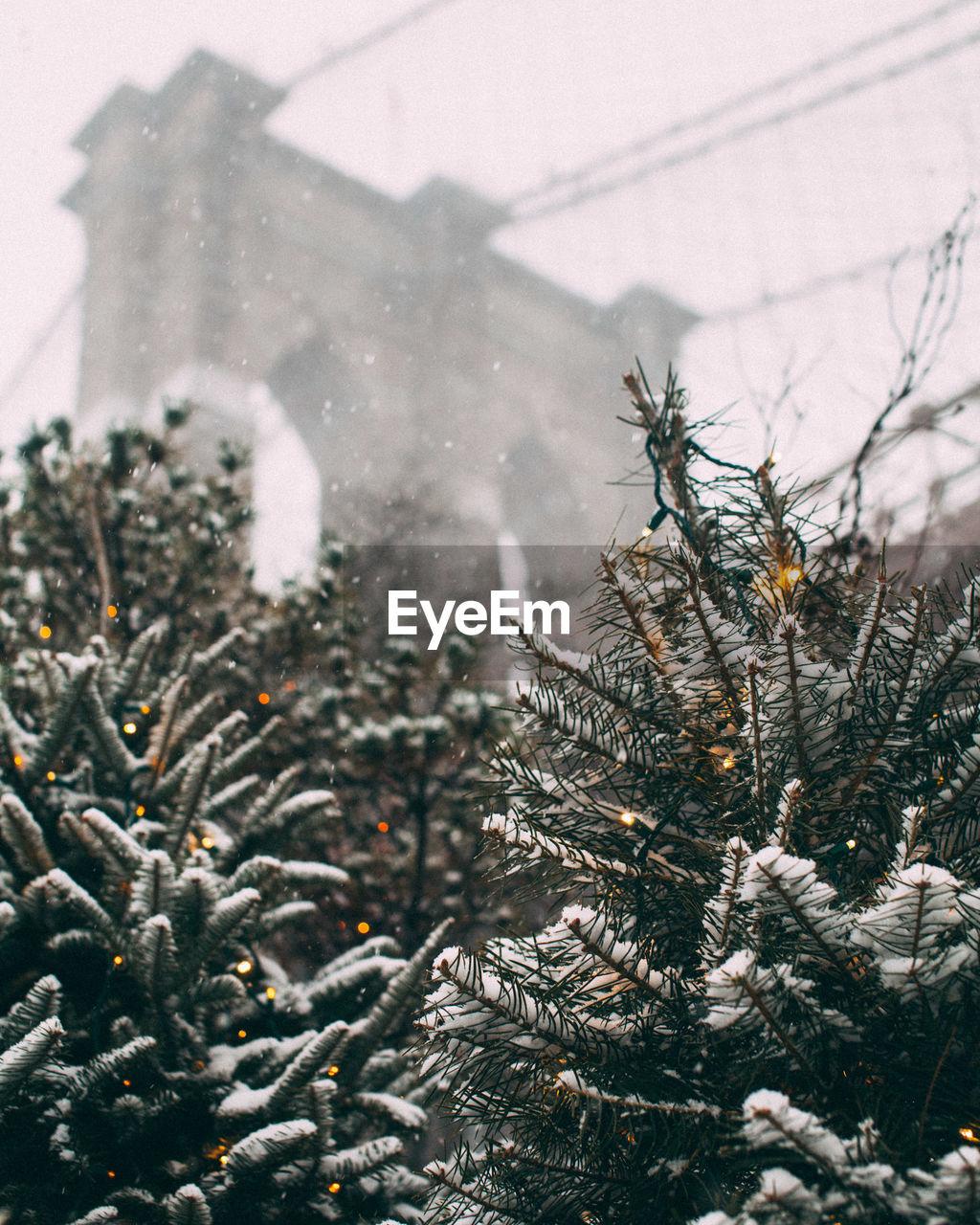 Trees against brooklyn bridge during winter