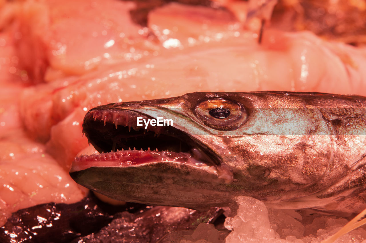 animal, vertebrate, close-up, seafood, fish, no people, for sale, food and drink, animal body part, animal themes, food, wellbeing, retail, freshness, one animal, raw food, market, focus on foreground, healthy eating, animal head, mouth open, fish market, animal mouth, marine