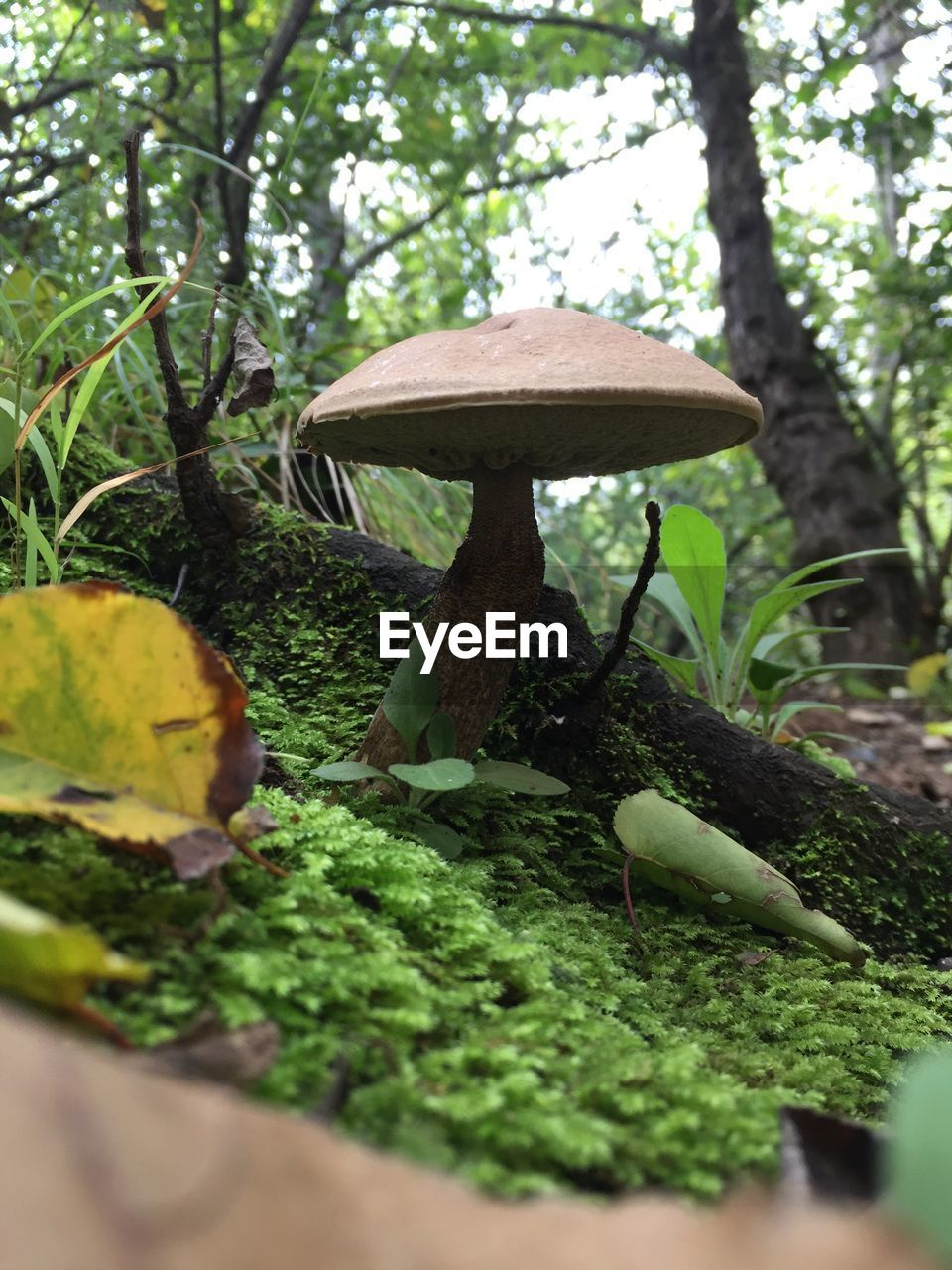 plant, growth, tree, vegetable, green color, food, nature, selective focus, mushroom, fungus, no people, beauty in nature, land, day, moss, leaf, close-up, plant part, food and drink, forest, outdoors, toadstool, surface level