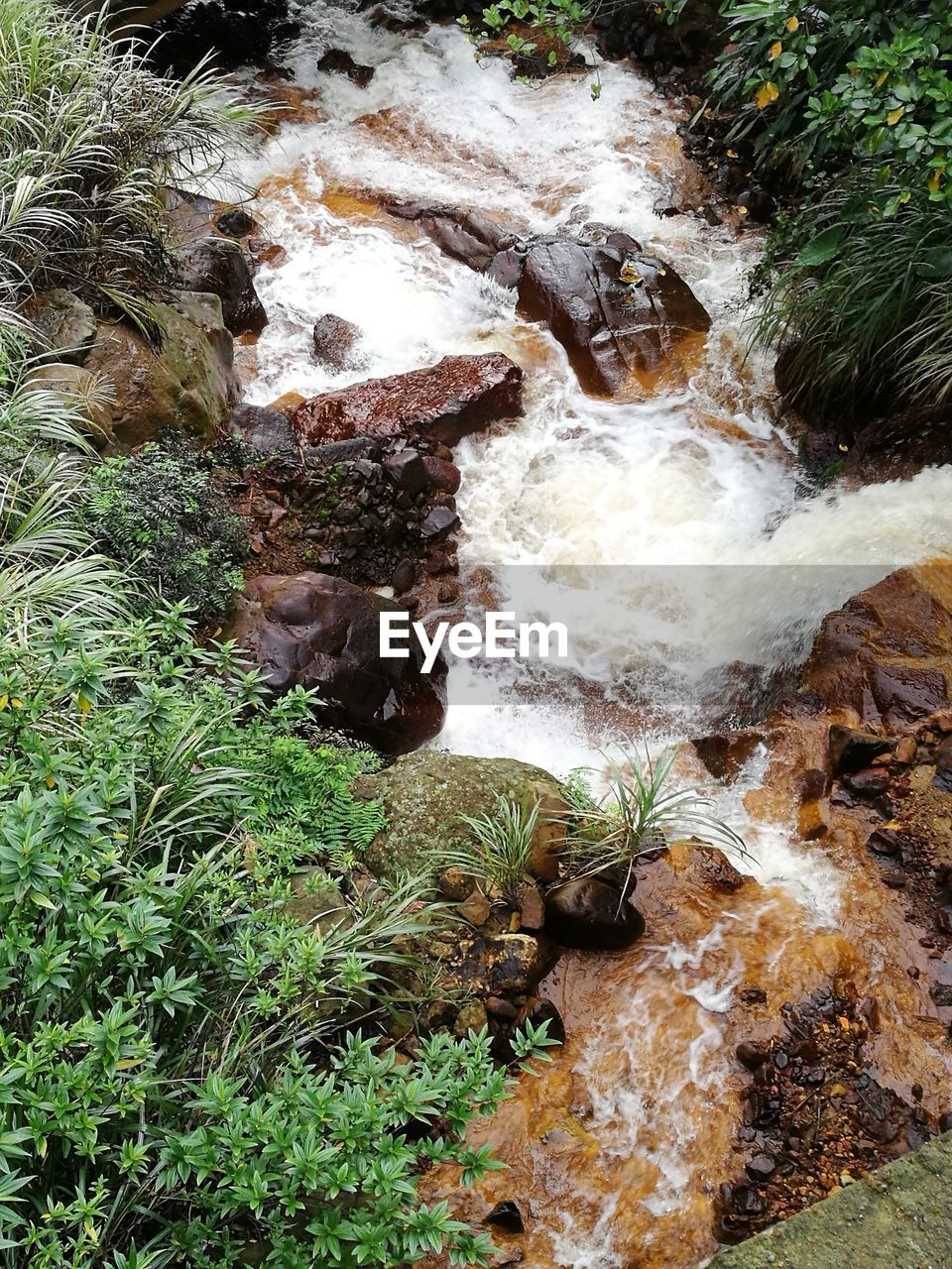water, flowing water, rock - object, nature, high angle view, waterfall, no people, river, outdoors, plant, day, motion, beauty in nature, animal themes, mammal