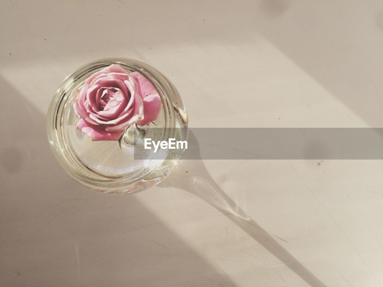 table, high angle view, indoors, glass - material, freshness, no people, food and drink, drink, glass, still life, household equipment, refreshment, directly above, close-up, transparent, drinking glass, flower, shadow, nature