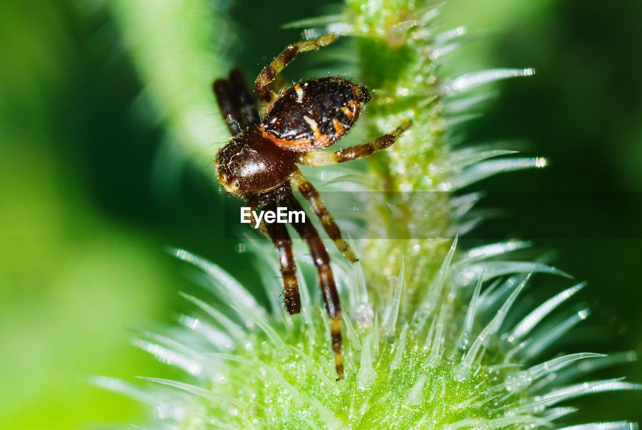 animal wildlife, invertebrate, animals in the wild, insect, close-up, animal themes, animal, one animal, nature, plant, growth, green color, selective focus, day, no people, beauty in nature, outdoors, fragility, arthropod, arachnid