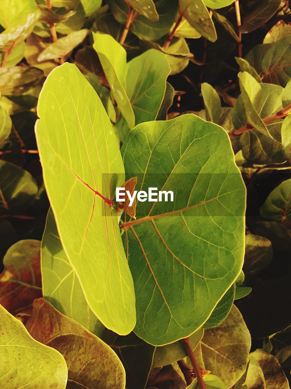 leaf, plant part, green color, growth, day, close-up, nature, plant, invertebrate, animal wildlife, insect, one animal, beauty in nature, animal, animals in the wild, no people, animal themes, leaf vein, outdoors, focus on foreground, leaves