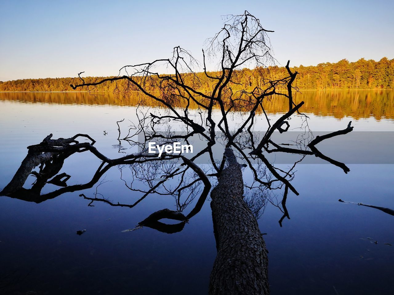 tree, tranquility, plant, sky, water, bare tree, tranquil scene, beauty in nature, lake, branch, nature, scenics - nature, no people, tree trunk, trunk, reflection, day, non-urban scene, outdoors, dead plant