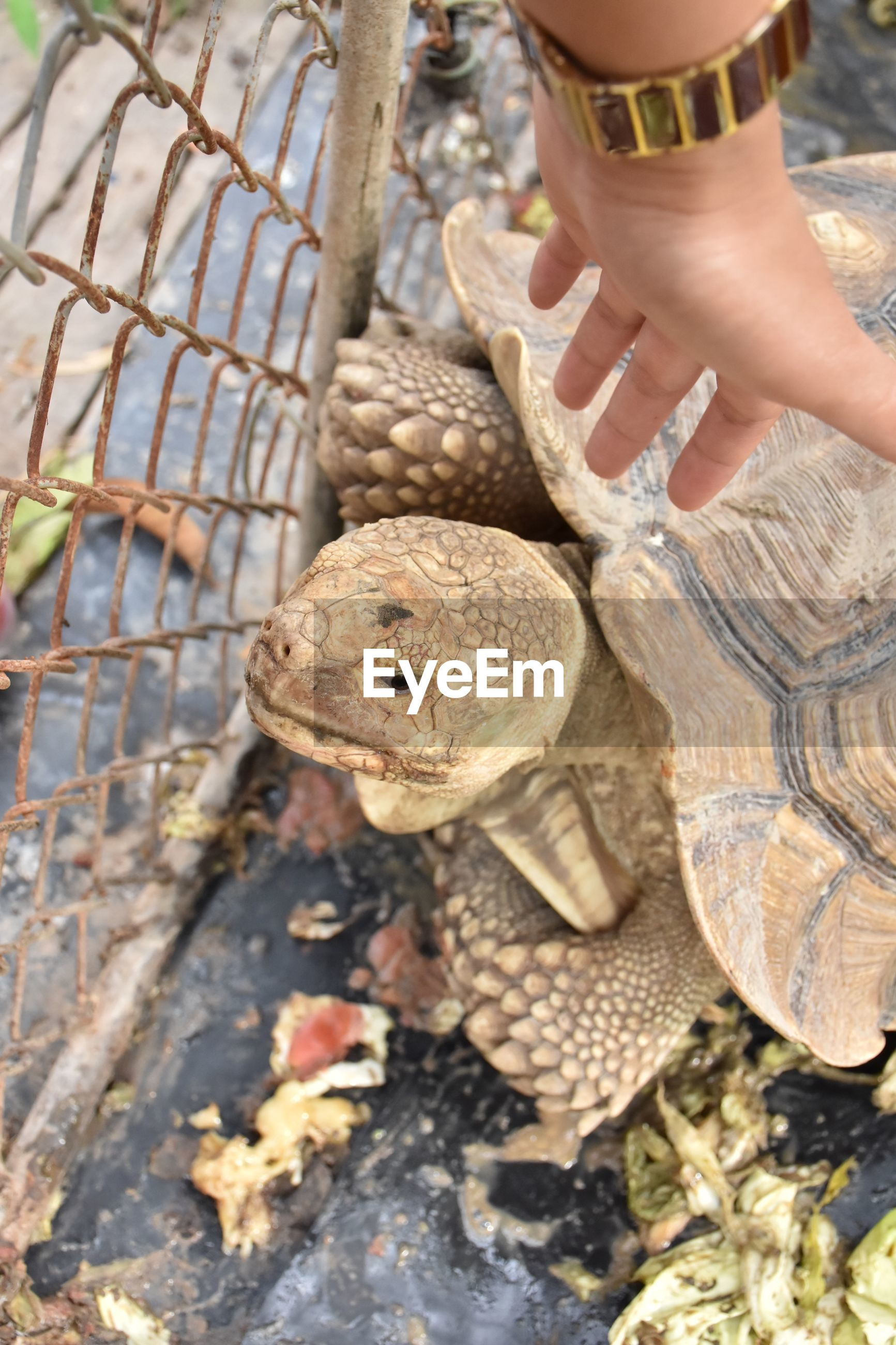 Cropped hand of woman reaching tortoise at zoo