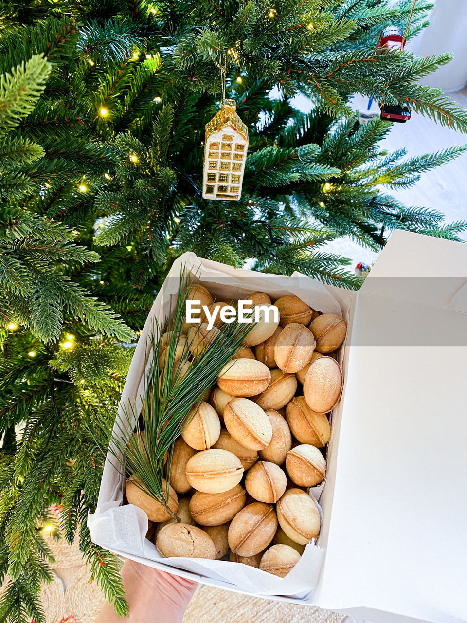 HIGH ANGLE VIEW OF CHRISTMAS TREE BY PLANT