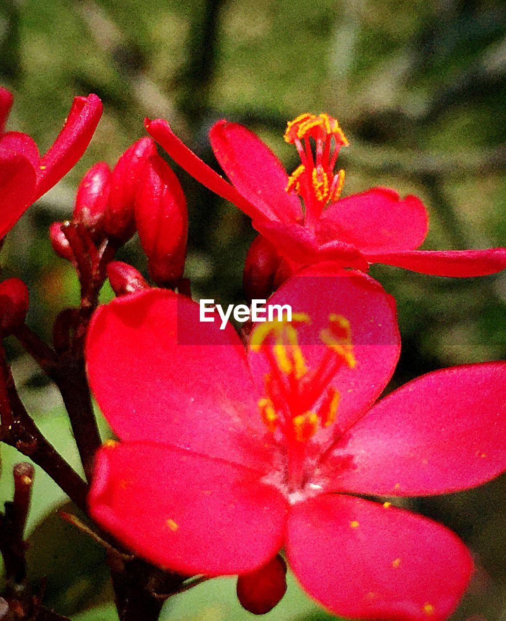 flower, petal, growth, flower head, nature, beauty in nature, freshness, fragility, plant, red, no people, close-up, day, outdoors, blooming, focus on foreground
