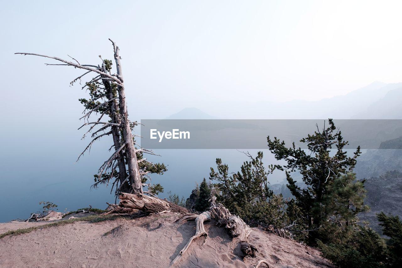 Dead Tree On Mountain Against Sky