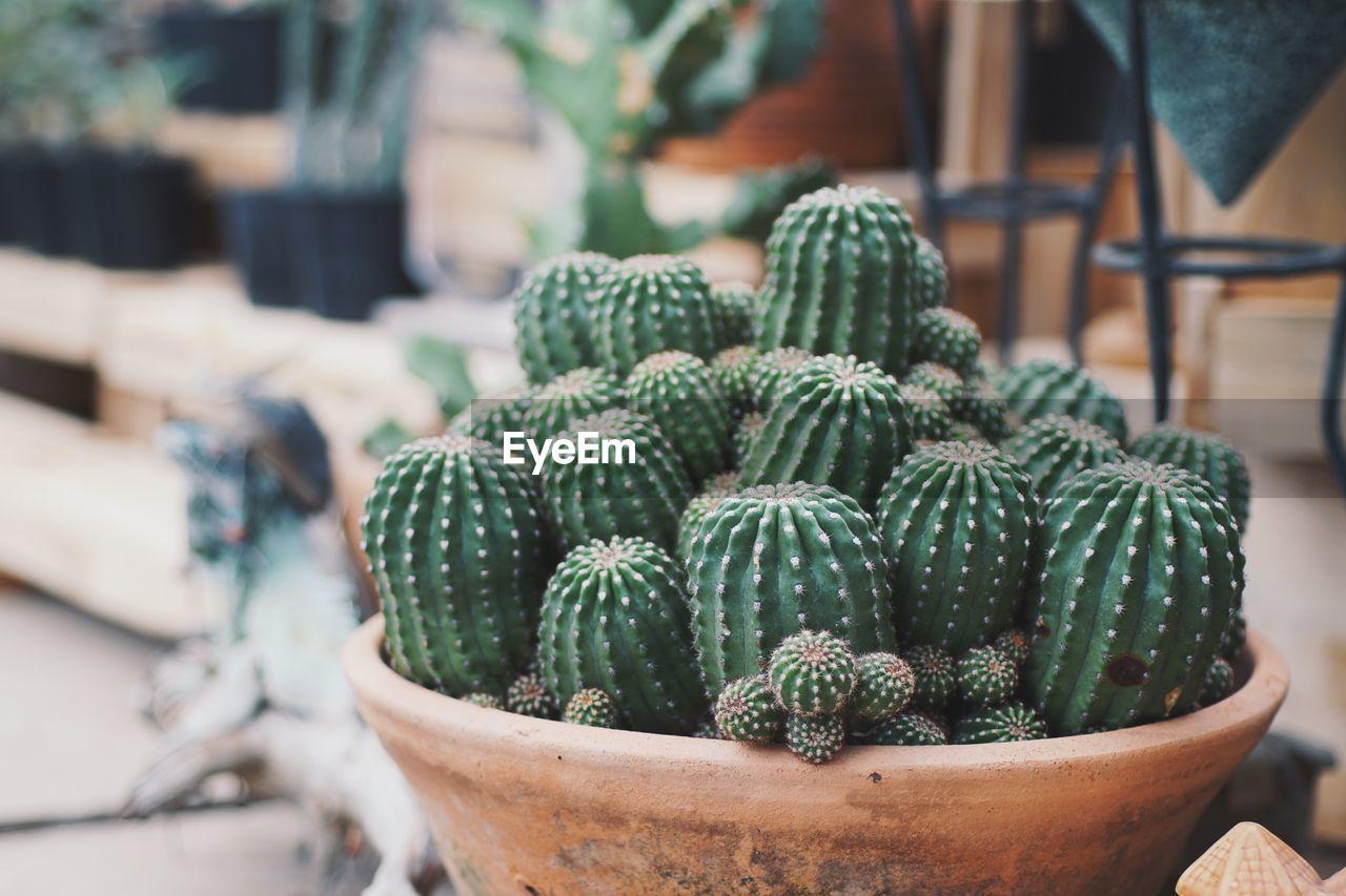 Close-Up Of Barrel Cactus Outdoors