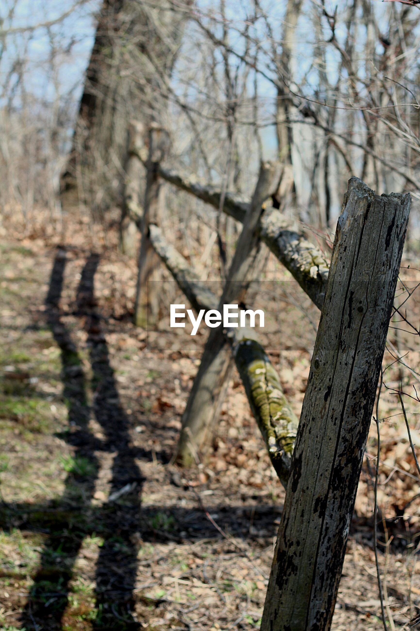 Wooden fence with shadow on field in forest