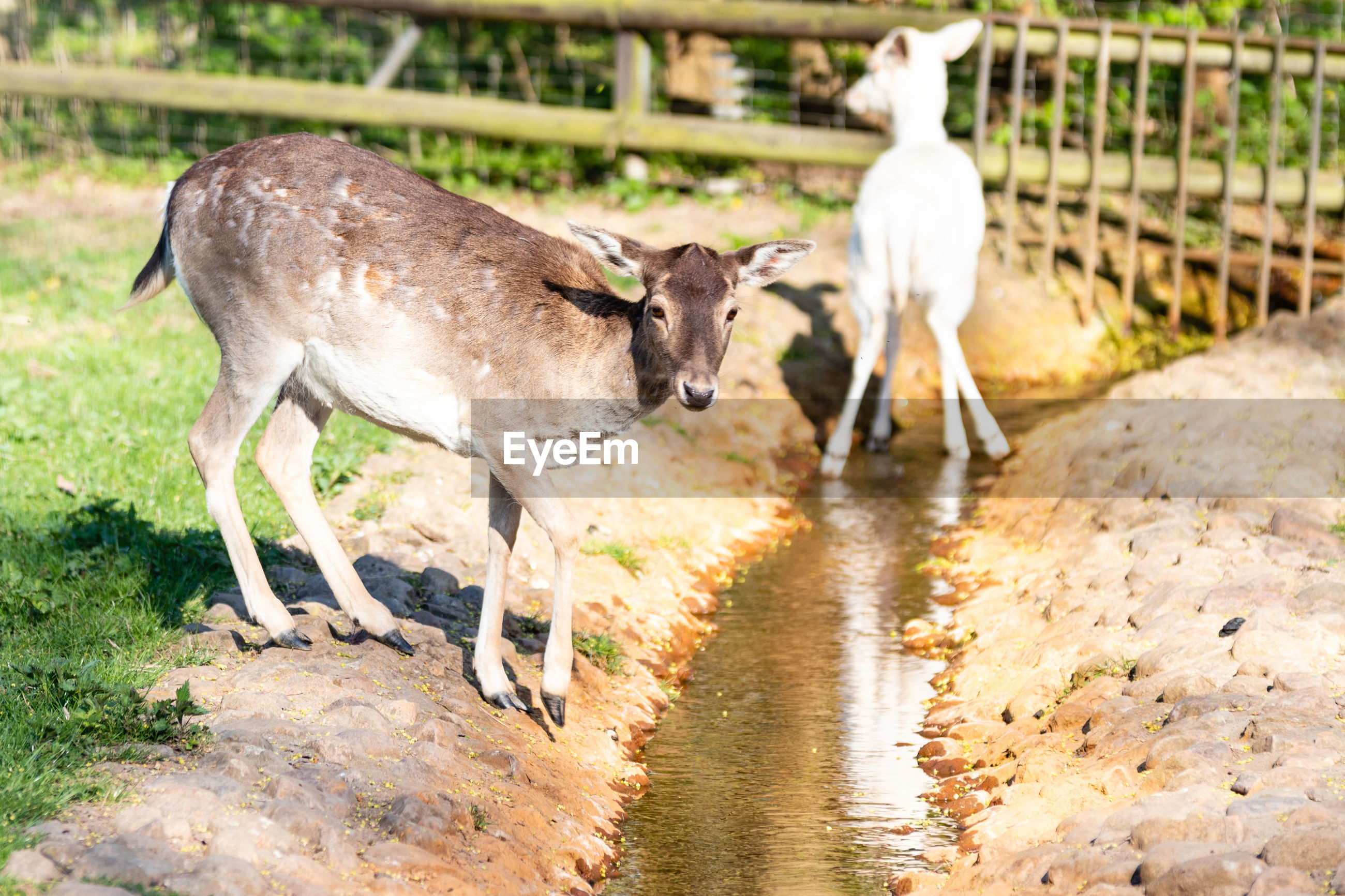 HORSE STANDING IN WATER