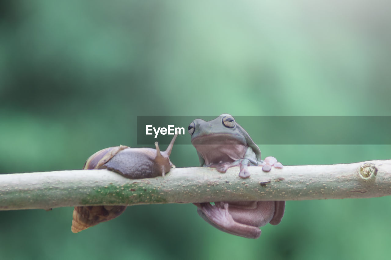 animal, animal themes, animal wildlife, vertebrate, animals in the wild, focus on foreground, one animal, no people, close-up, nature, bird, day, selective focus, outdoors, branch, frog, zoology, perching, small