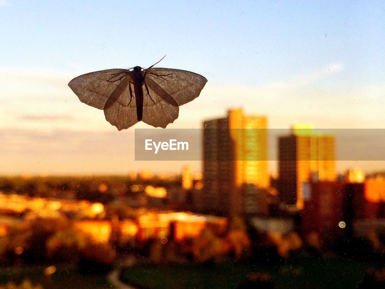 sky, focus on foreground, building exterior, sunset, close-up, architecture, built structure, nature, no people, invertebrate, city, insect, outdoors, animal wing, one animal, building, animal themes, animal, animals in the wild, animal wildlife, cityscape, butterfly - insect