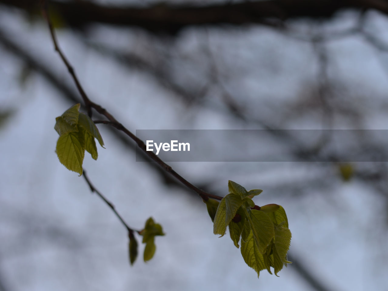 leaf, nature, focus on foreground, beauty in nature, growth, outdoors, day, branch, close-up, plant, no people, fragility, freshness