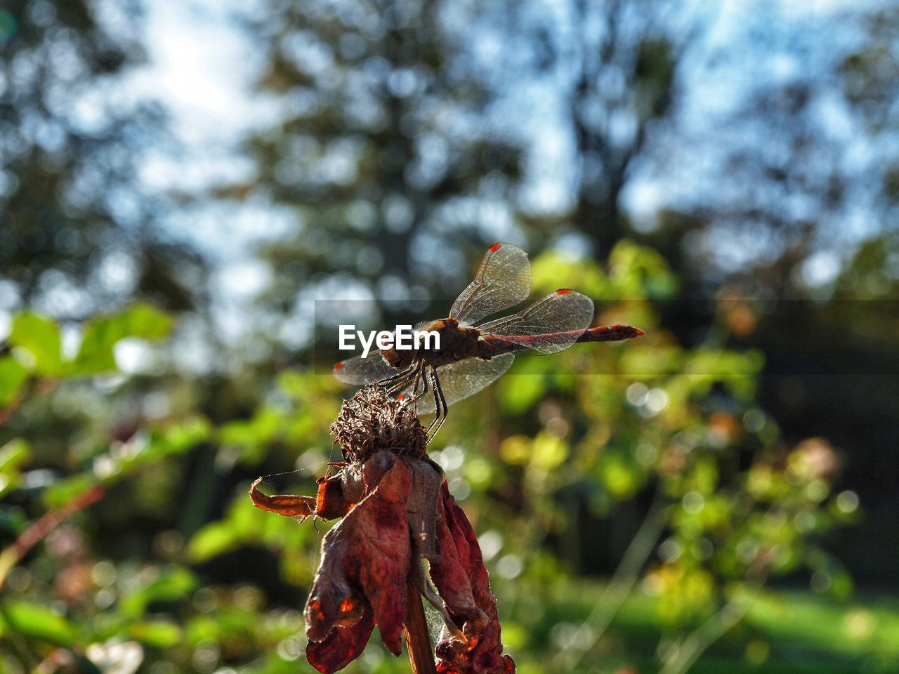 plant, focus on foreground, no people, day, nature, close-up, tree, growth, beauty in nature, leaf, insect, plant part, invertebrate, outdoors, animals in the wild, animal wildlife, dry, vulnerability, fragility, sunlight, animal wing