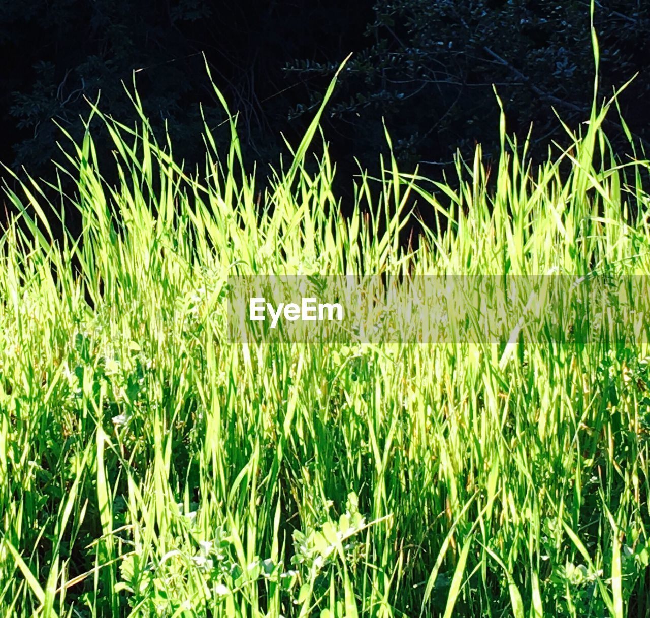 nature, grass, growth, no people, plant, outdoors, day, beauty in nature