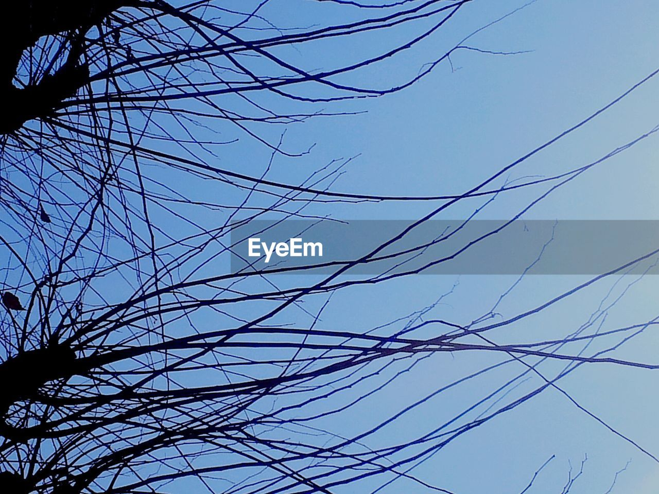 low angle view, cable, tree, sky, branch, no people, bare tree, outdoors, day, clear sky, nature, complexity, beauty in nature