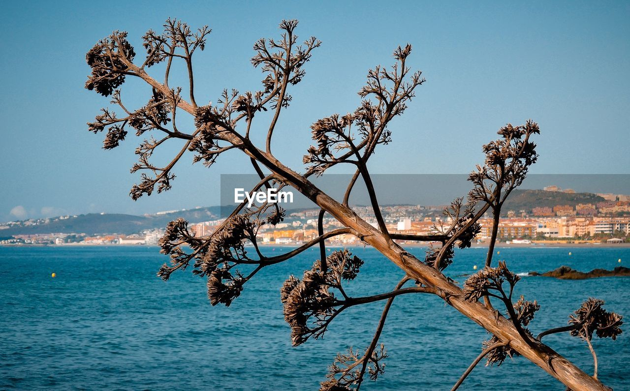 Dried Tree By Sea Against Clear Sky