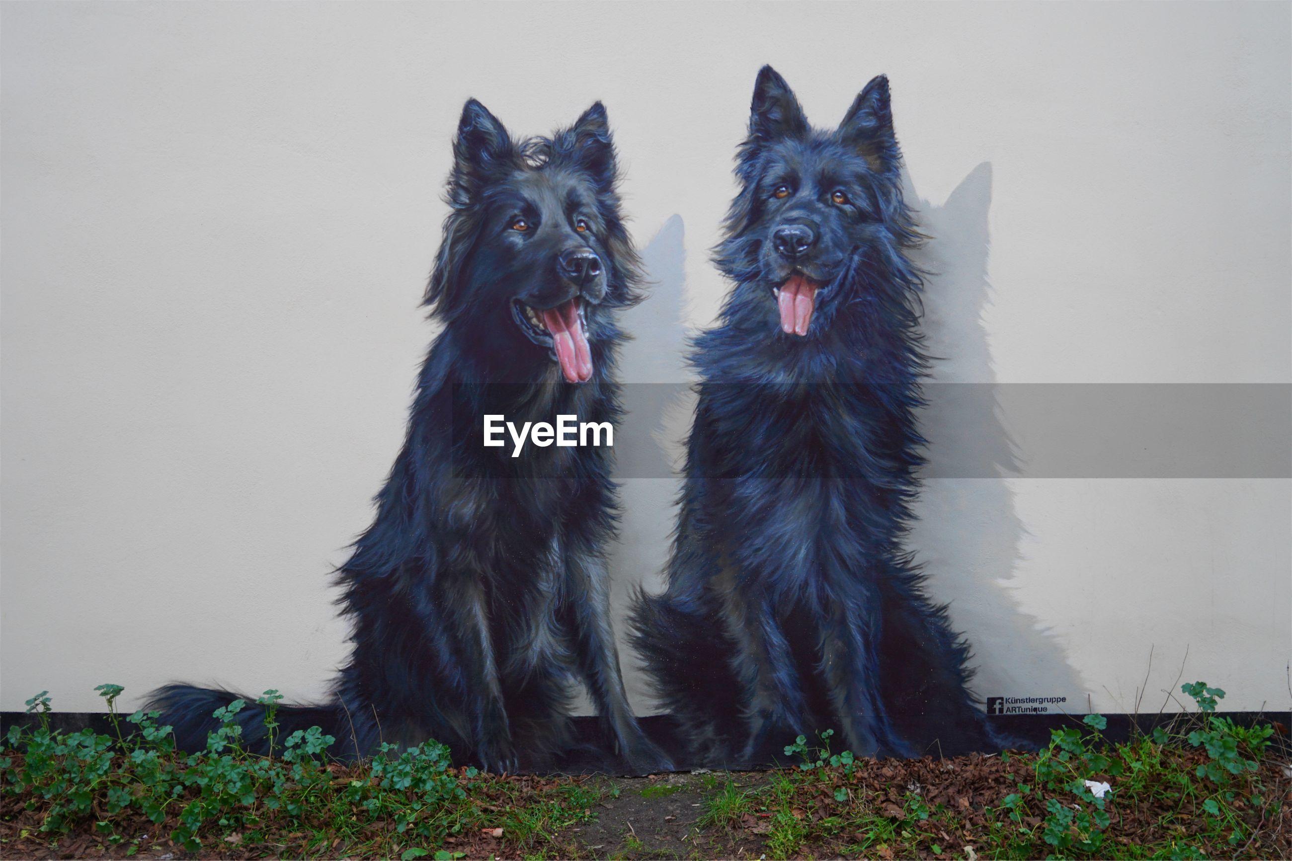 PORTRAIT OF DOGS ON FIELD