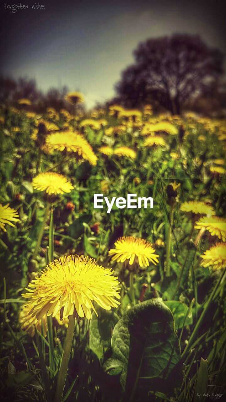 flower, yellow, growth, nature, beauty in nature, plant, fragility, petal, field, freshness, flower head, outdoors, no people, spring, close-up, blooming, day
