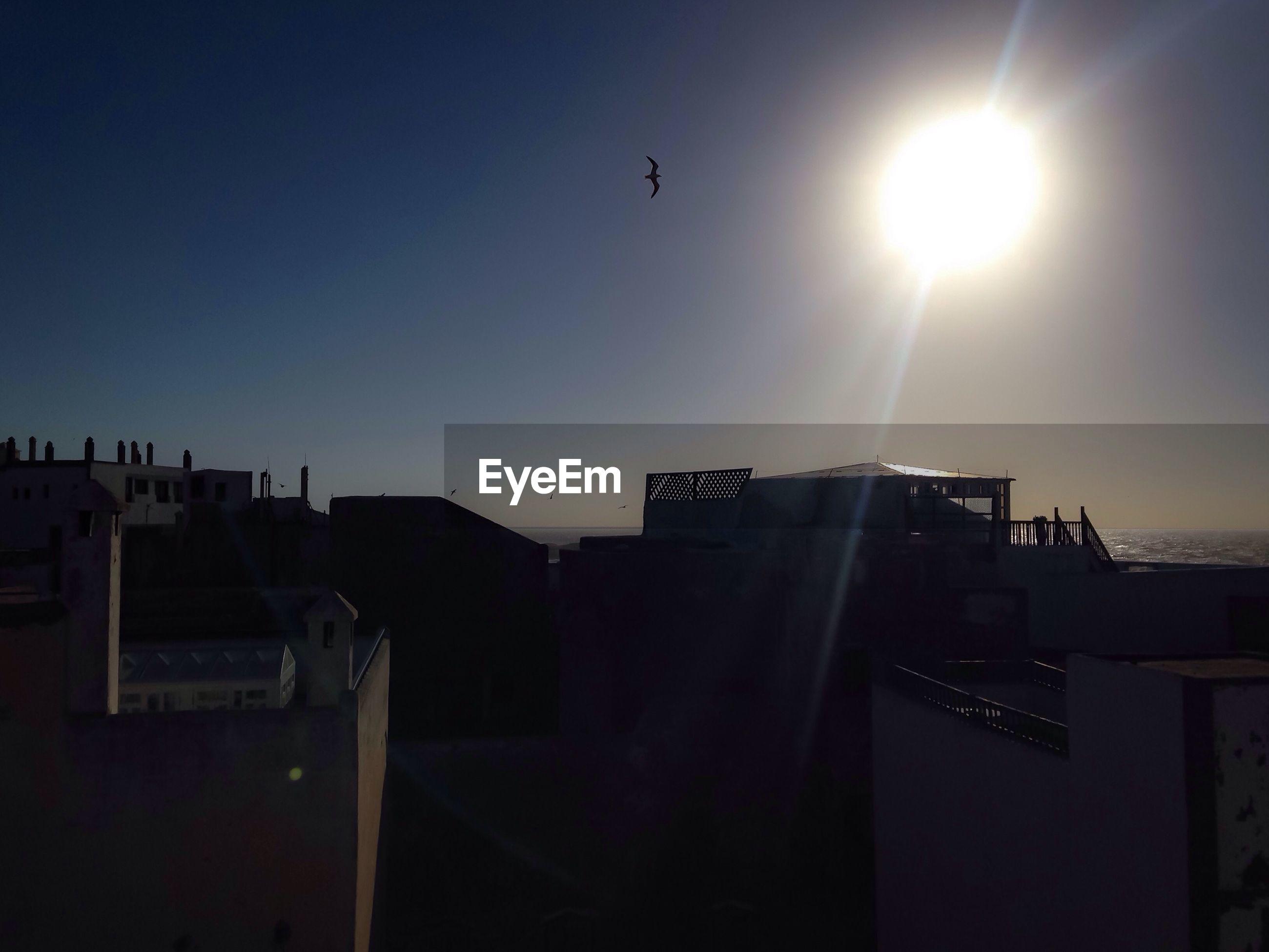 Bird flying over buildings against sky on sunny day