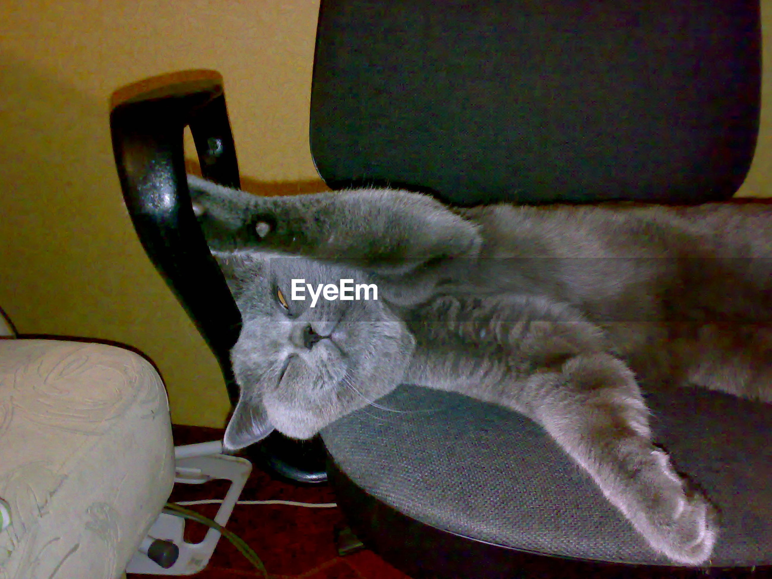 Cat on office chair