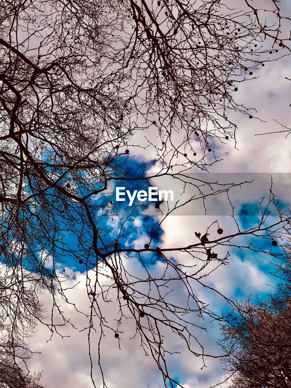 branch, beauty in nature, tree, nature, bare tree, sky, day, outdoors, no people, low angle view, blue, growth