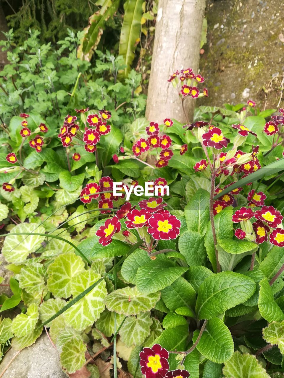 growth, nature, plant, leaf, green color, outdoors, flower, beauty in nature, freshness, day, no people, close-up, flower head