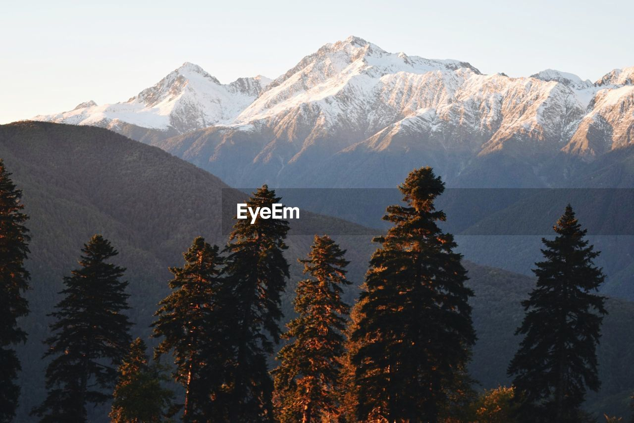 High section of trees against mountain range