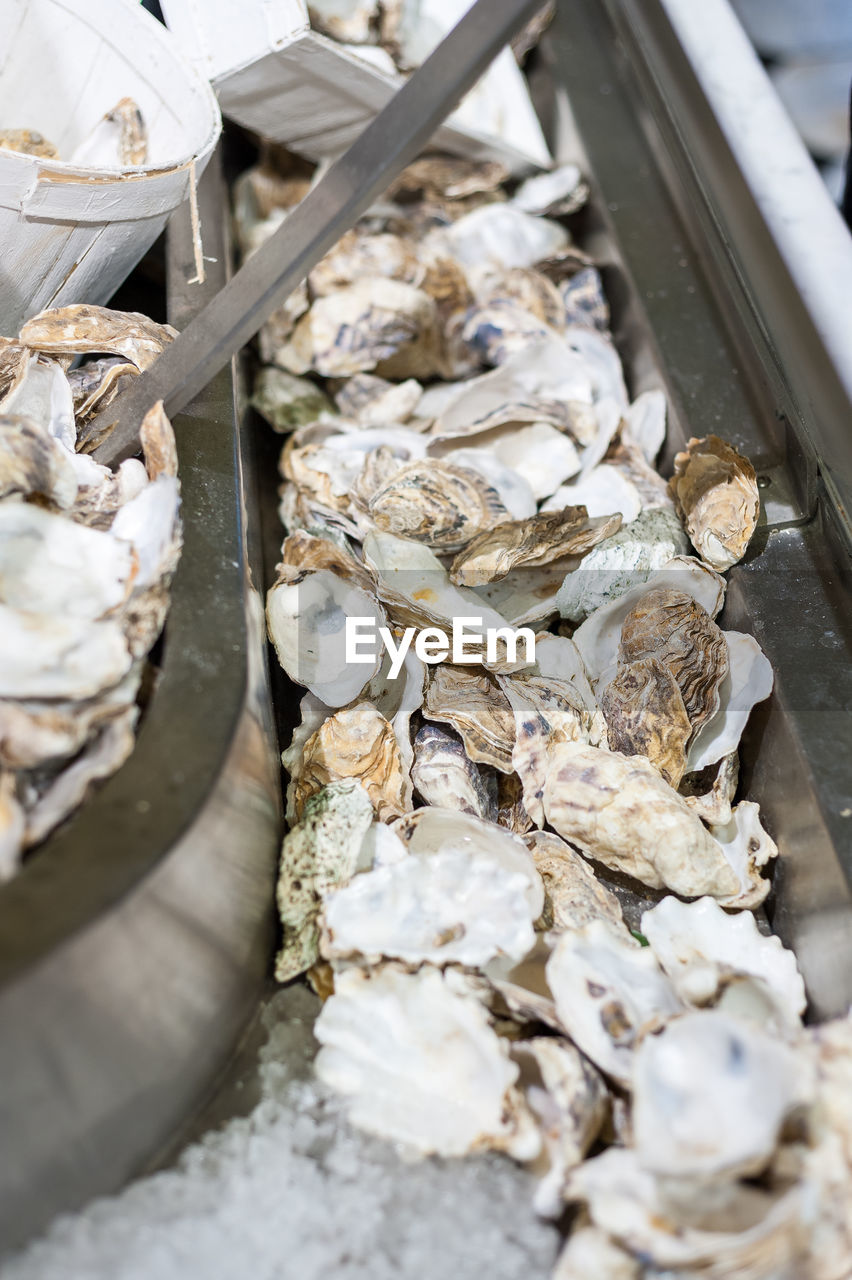 HIGH ANGLE VIEW OF SHELLS IN THE CONTAINER