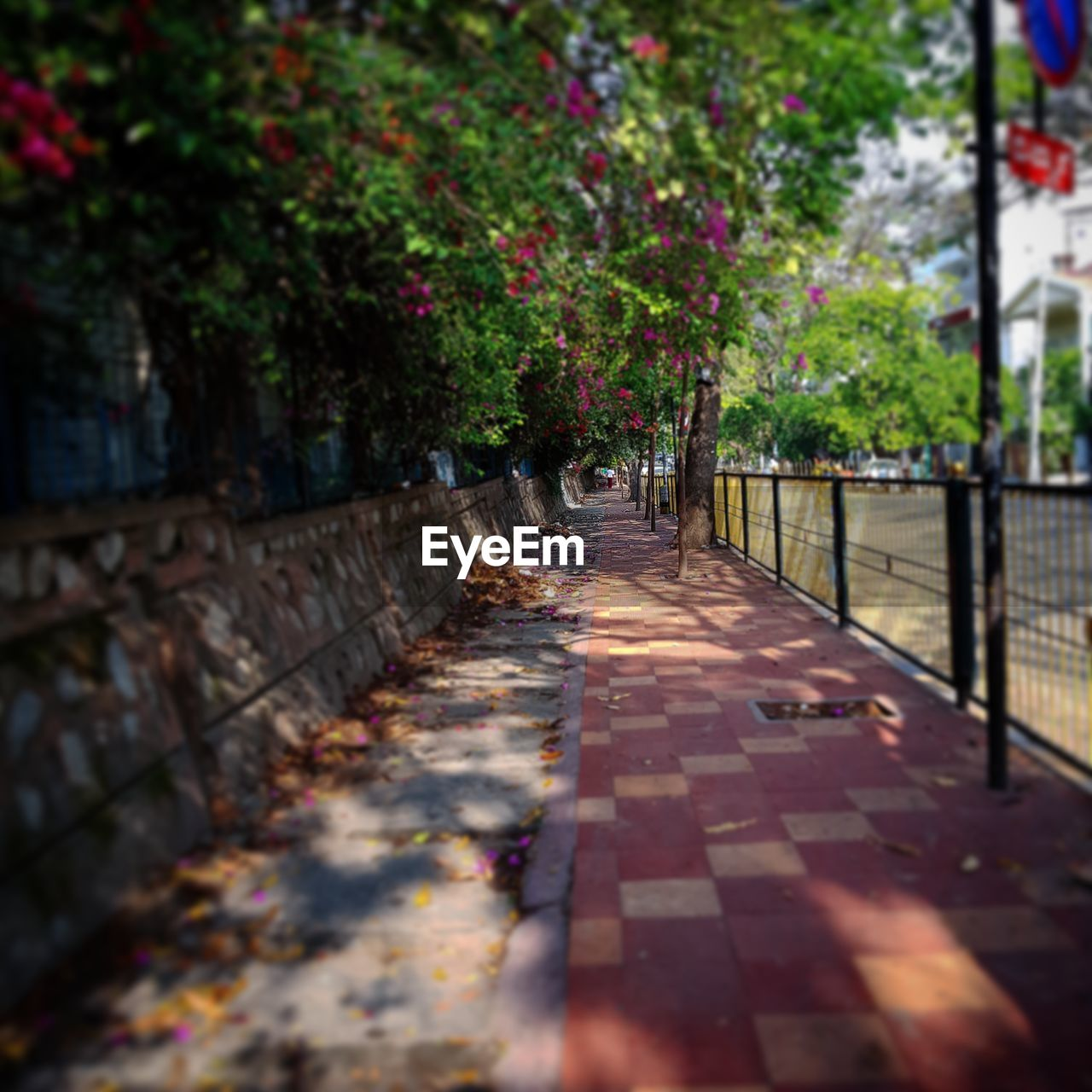 direction, plant, nature, footpath, day, the way forward, selective focus, diminishing perspective, tree, outdoors, no people, growth, built structure, architecture, city, sidewalk, leaf, street, park, railing, long