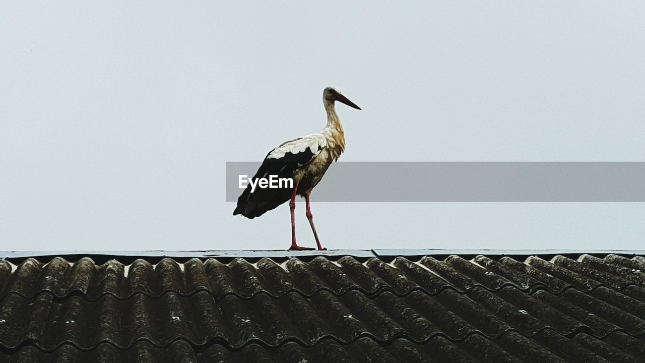 Low Angle View Of Stork On Roof Against Clear Sky