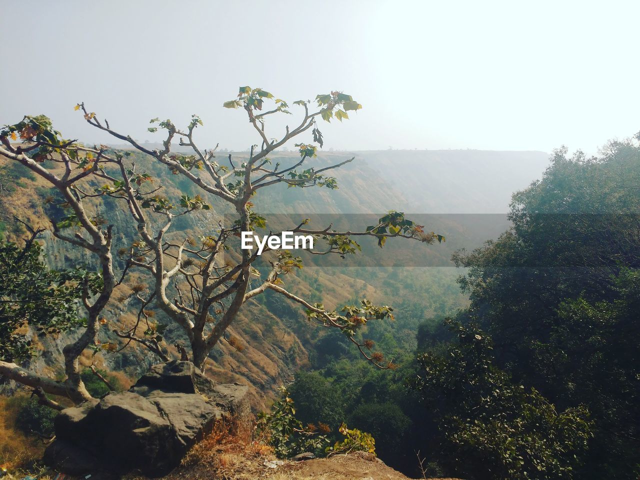 tree, growth, nature, mountain, day, no people, beauty in nature, plant, tranquility, scenics, outdoors, landscape, clear sky, branch, sky, freshness