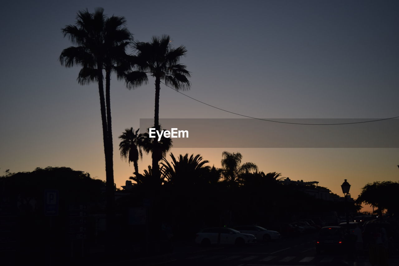 palm tree, tree, sunset, silhouette, clear sky, no people, nature, sky, outdoors