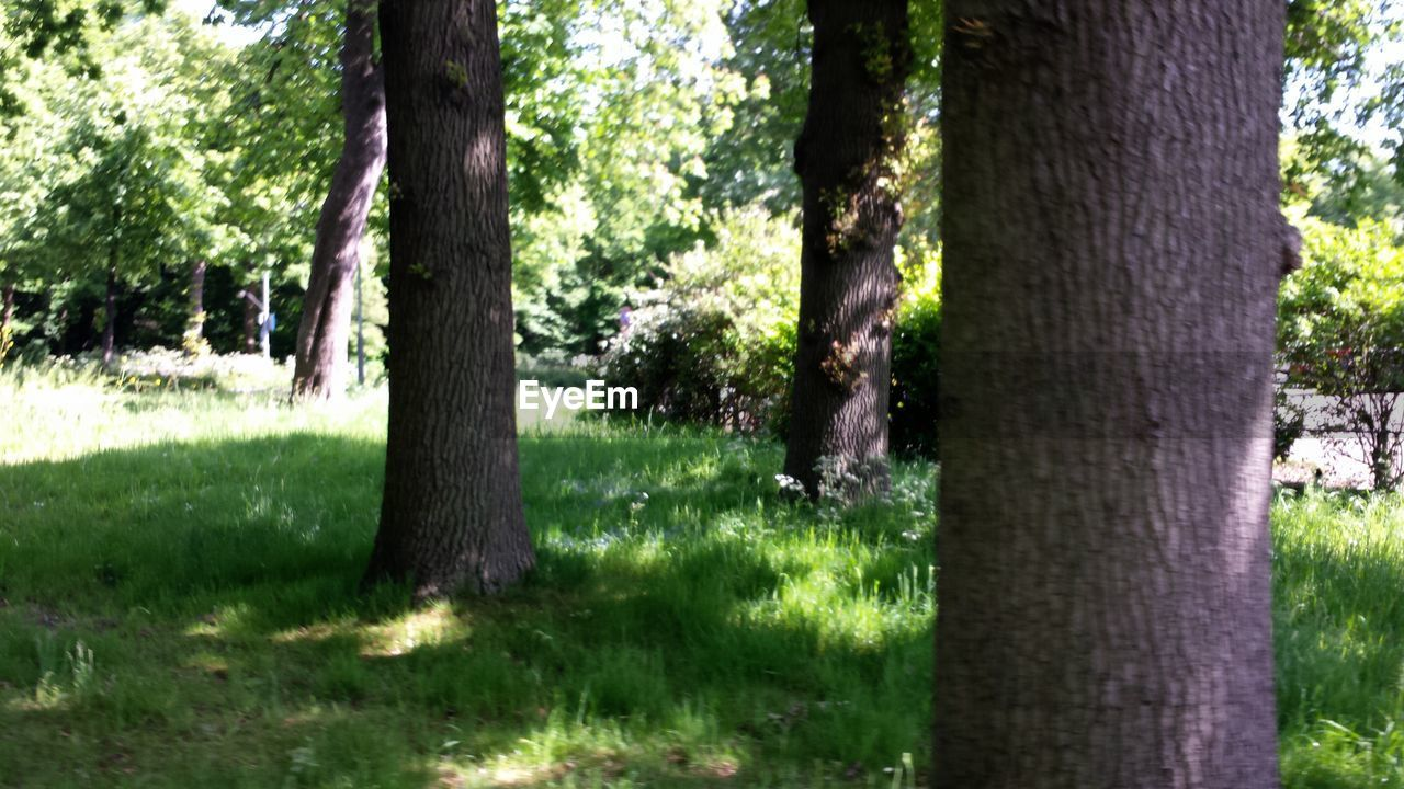tree trunk, tree, growth, nature, grass, day, forest, outdoors, no people, beauty in nature