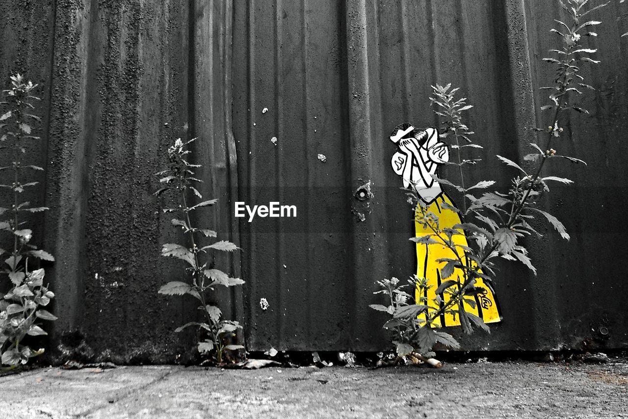 graffiti, yellow, day, outdoors, no people, tree, corrugated iron, flower, close-up