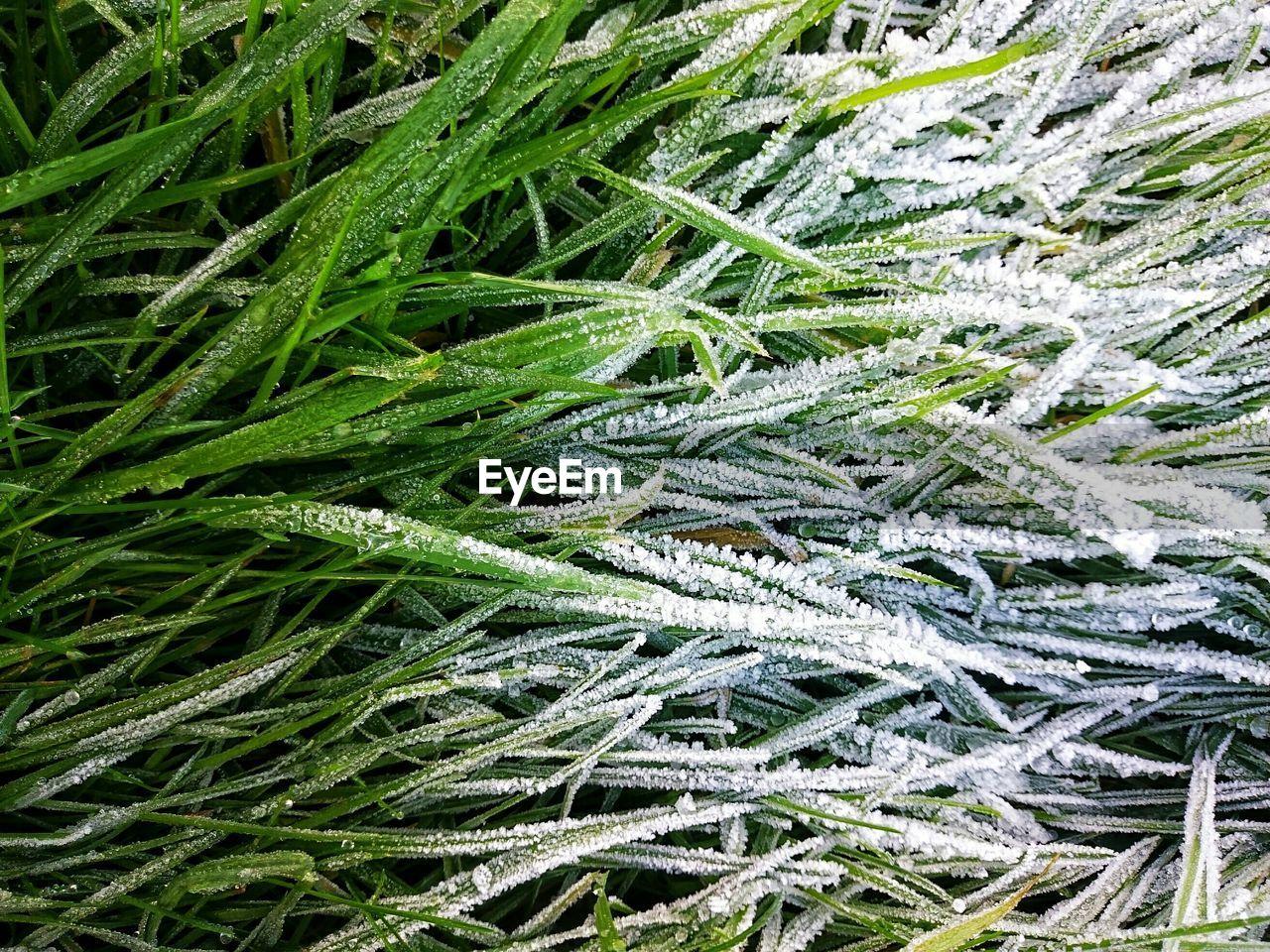 Full Frame Shot Of Grass In Winter