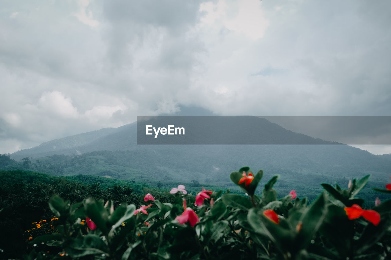 Scenic view of flowering plants against cloudy sky