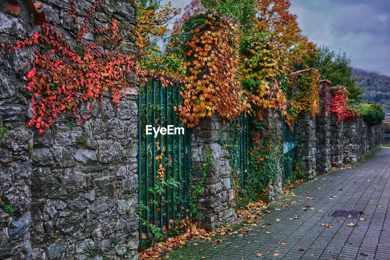 plant, autumn, nature, change, tree, day, growth, no people, beauty in nature, flowering plant, flower, freshness, leaf, outdoors, plant part, orange color, architecture, wall, red, built structure, autumn collection