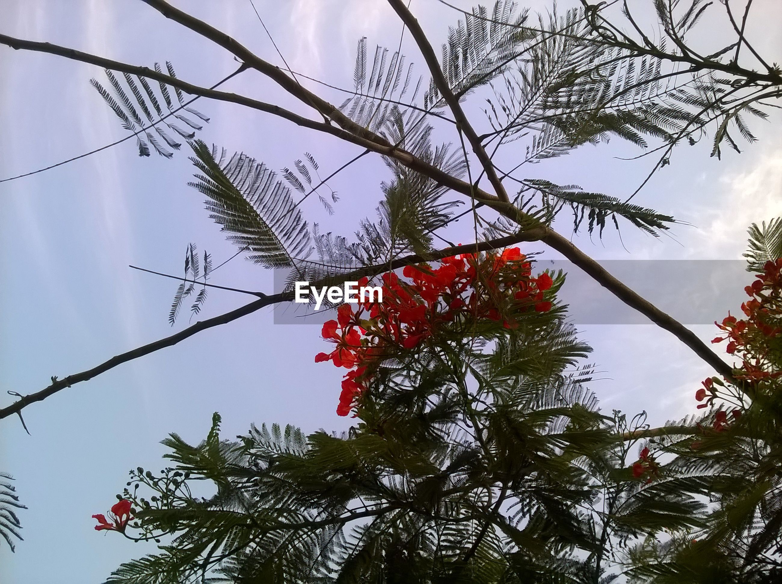 tree, growth, nature, branch, low angle view, beauty in nature, no people, red, fruit, freshness, outdoors, sky, day, berry, close-up, rowanberry