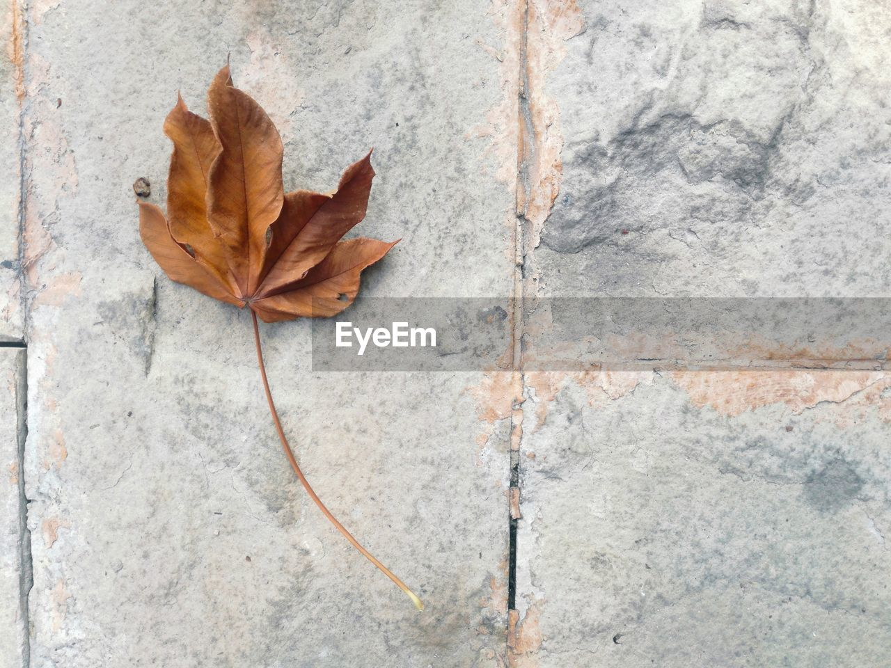 leaf, plant part, autumn, close-up, dry, no people, vulnerability, fragility, nature, change, directly above, textured, wall - building feature, outdoors, day, plant, natural pattern, leaf vein, brown, solid, concrete, maple leaf, natural condition, leaves