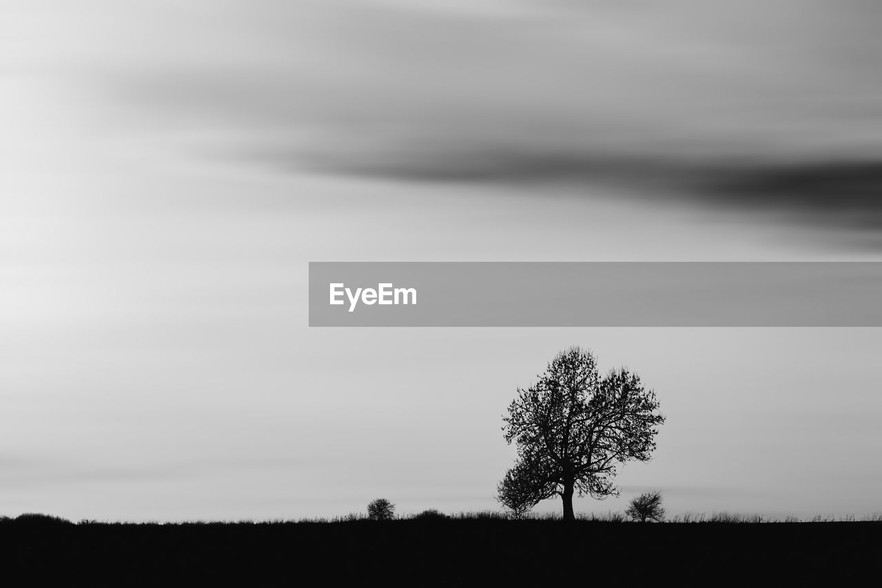 tree, sky, tranquility, plant, field, beauty in nature, landscape, tranquil scene, land, scenics - nature, environment, nature, cloud - sky, no people, non-urban scene, growth, single tree, horizon over land, outdoors, horizon, isolated