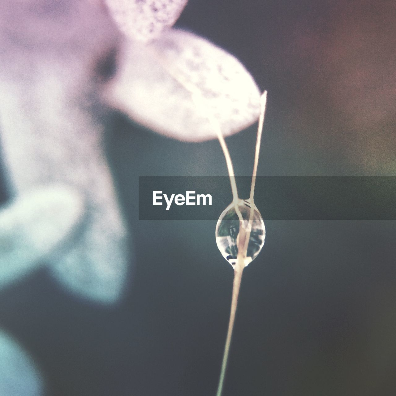 close-up, focus on foreground, nature, plant, fragility, no people, day, hanging, outdoors, beauty in nature