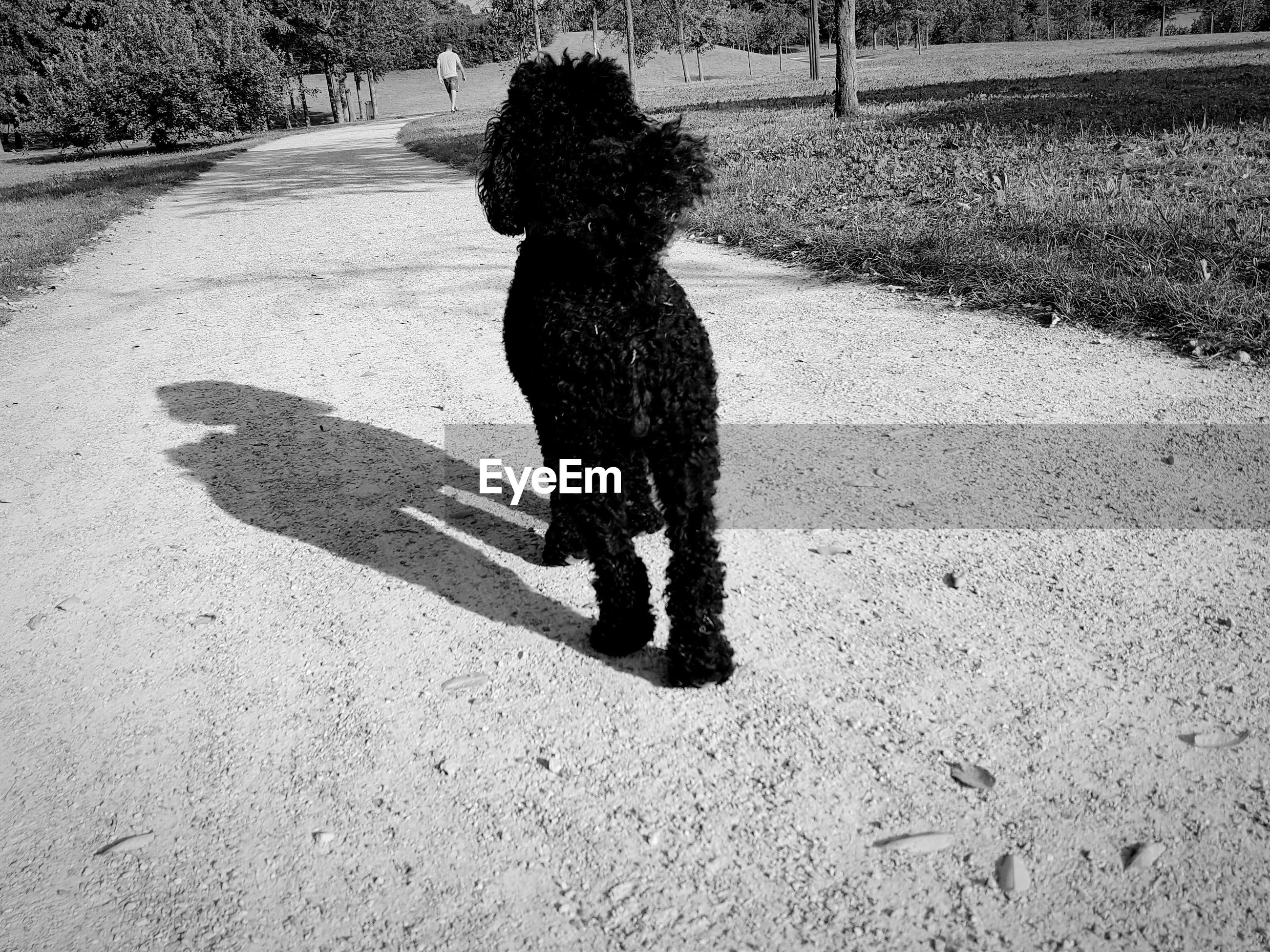 HIGH ANGLE VIEW OF DOG STANDING ON ROAD