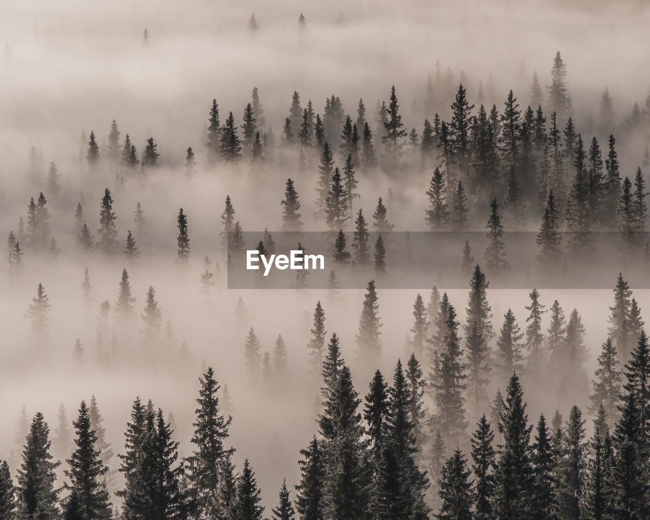 beauty in nature, plant, tree, tranquil scene, tranquility, scenics - nature, fog, no people, nature, growth, non-urban scene, land, mountain, day, forest, environment, sky, high angle view, idyllic, pine tree, coniferous tree