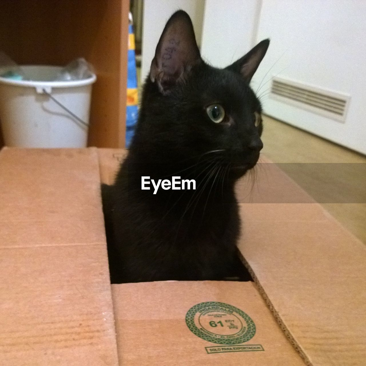domestic cat, one animal, mammal, animal themes, pets, feline, cardboard box, domestic animals, indoors, no people, whisker, close-up, day