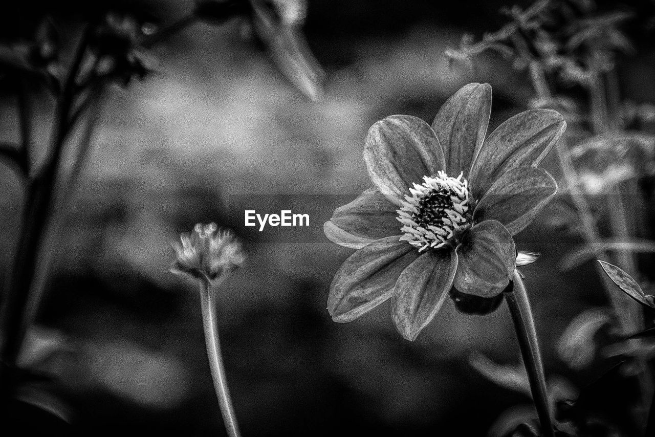 flower, fragility, growth, nature, petal, plant, focus on foreground, flower head, beauty in nature, blooming, freshness, outdoors, no people, close-up, day