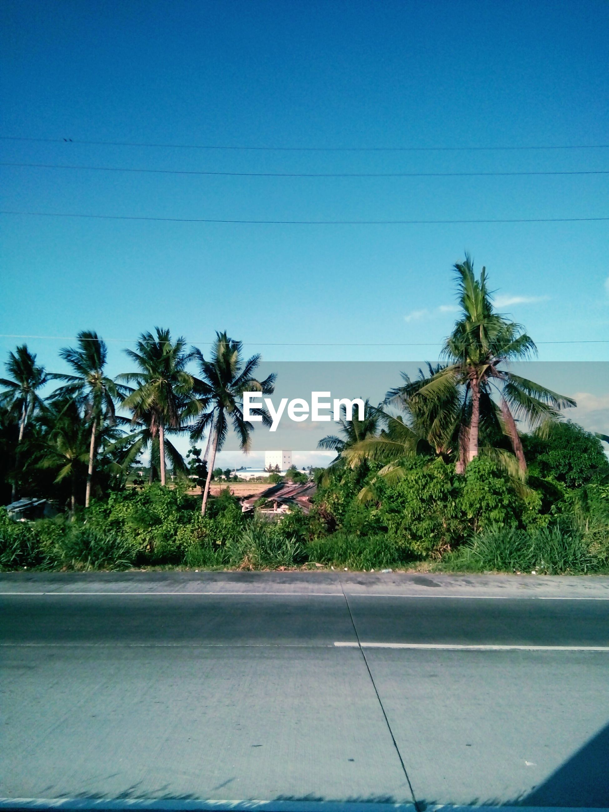 palm tree, tree, clear sky, blue, copy space, growth, low angle view, sky, road, nature, coconut palm tree, sunlight, built structure, day, outdoors, no people, plant, building exterior, green color, tree trunk