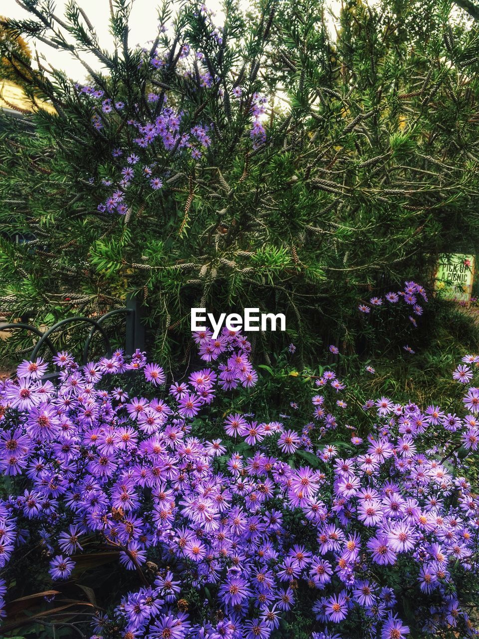 flower, growth, blossom, beauty in nature, nature, tree, purple, botany, fragility, no people, rhododendron, plant, pink color, day, outdoors, freshness, springtime, tranquility, branch