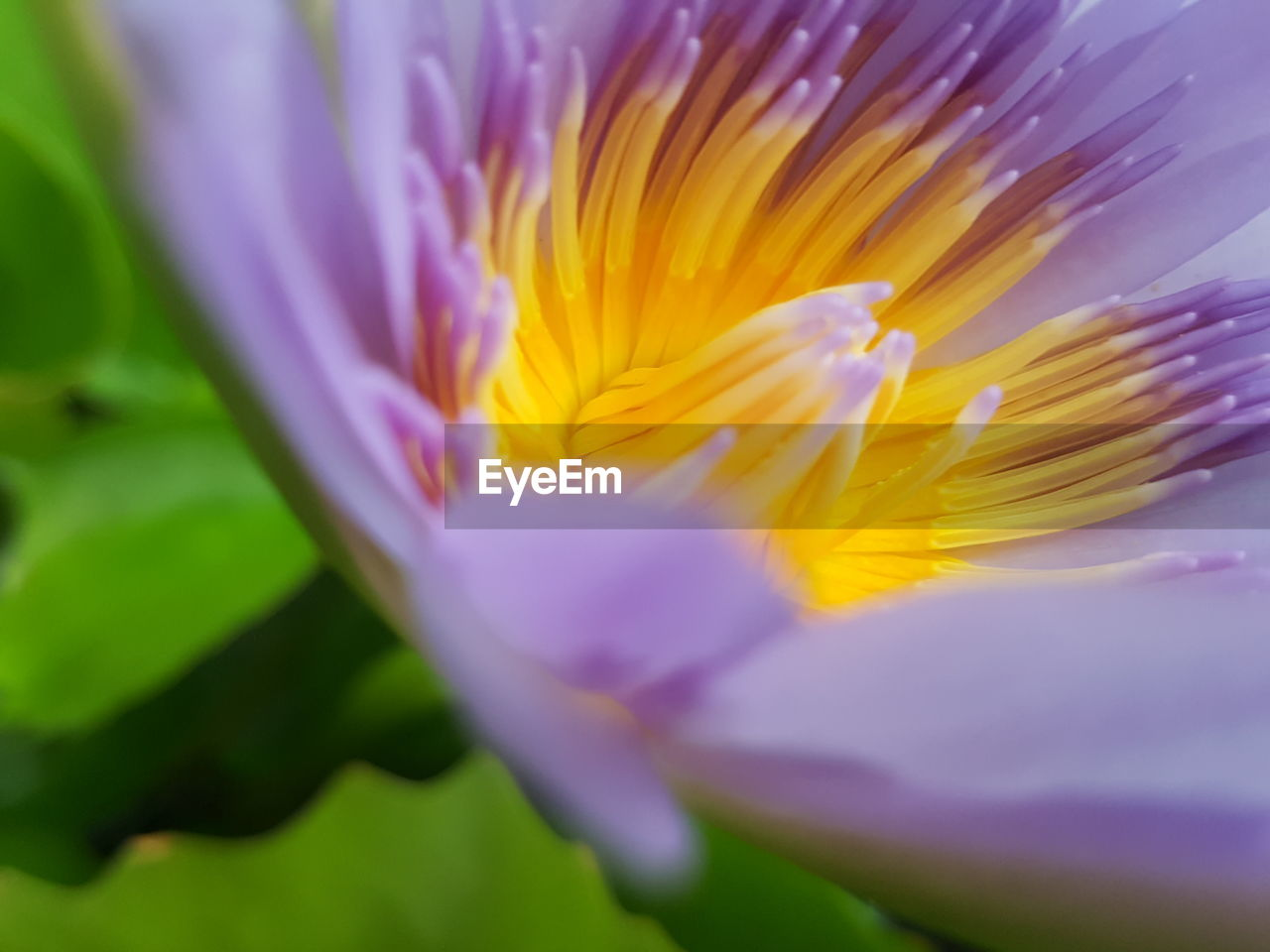 flower, vulnerability, fragility, flowering plant, beauty in nature, freshness, plant, petal, close-up, flower head, inflorescence, growth, selective focus, yellow, no people, nature, pollen, day, purple, sepal